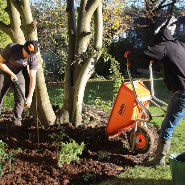 Mulching with horse manure