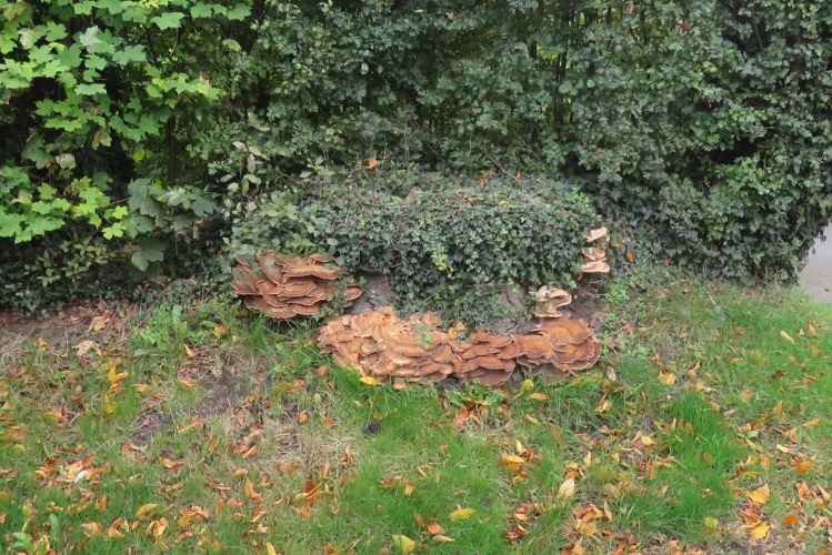 A fungal infection has destroyed this tree