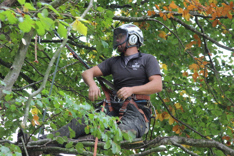 Tree surgery by SETC - removing branches one by one