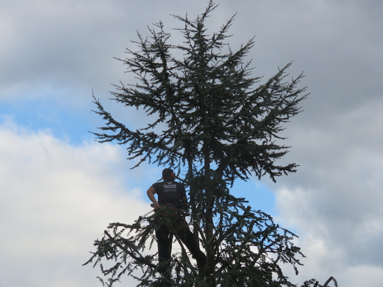 Ashley Sessford assessing the tree surgery